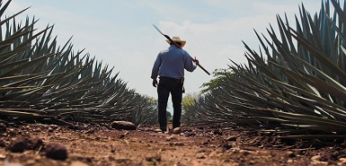 City of Tequila gears up for a smart future with Hitachi